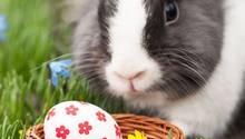 Statt Ostereiern sollte der Osterhase uns in diesem Jahr auch mal ein paar andere Überraschungen in Nest legen.