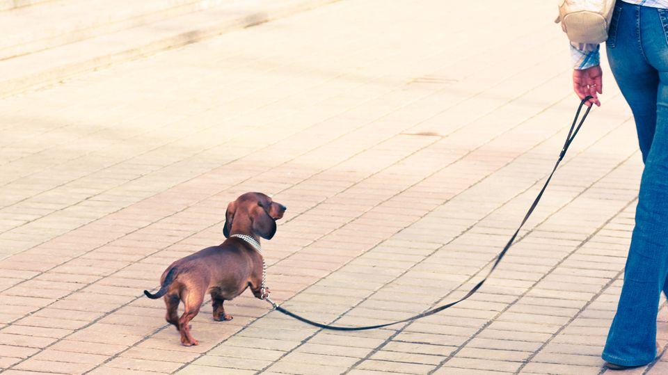 Vom Wolf zum Haushund: Hund und Mensch - eine Freundschaft, viel älter als gedacht
