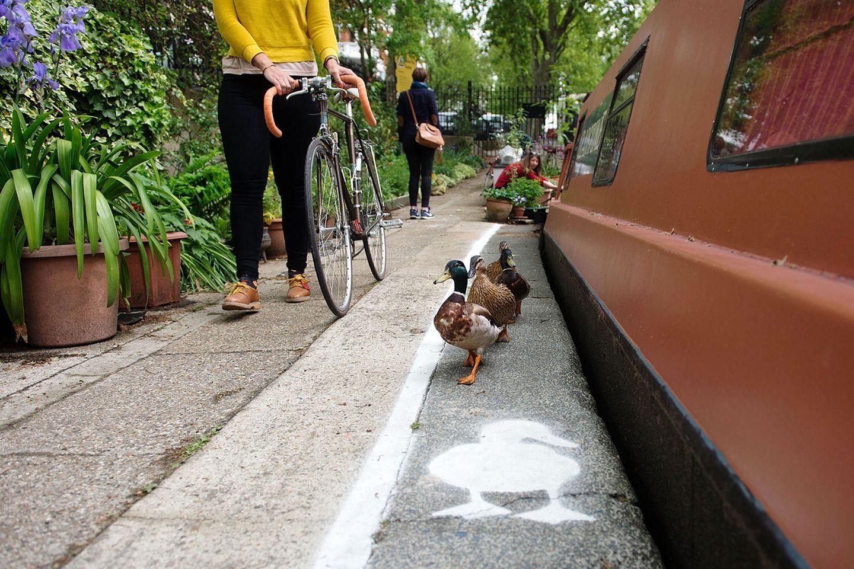 """Mai  London, England. """"Share the Space, Drop your Pace"""" heißt die Kampagne der gemeinnützigen Organisation """"Canal & River Trust"""", die Flüsse in England und Wales verwaltet. Um zu zeigen, wie eng Mensch und Tier teilweise zusammen leben und wie wenig Platz sie sich teilen müssen, wurden in London vorübergehend """"Entenpfade"""" auf viel besuchte Treidelpfade gezeichnet. Die Aktion findet auch in den Städten Birmingham und Manchester statt."""
