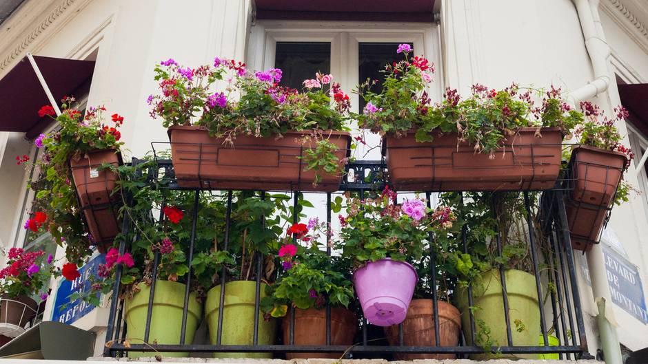 Kast Voor Balkon : Garten und balkon: grillen feiern oder sex das ist alles verboten