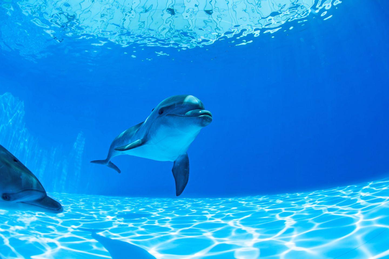 Delfine faszinieren - doch das undichte Schwimmbecken der Meeressäuger sorgt nun in Nürnberg für einen grotesken Streit.