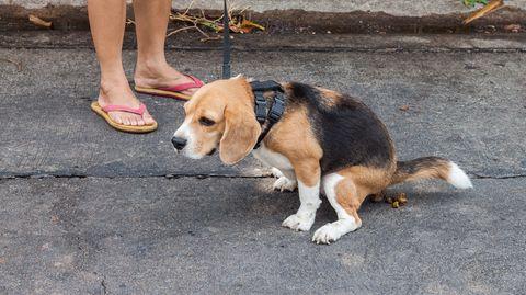 Wer im Londoner Stadtteil Barking and Dagenham künftig den Dreck seines Hundes liegen lässt, muss mit strafrechtlicher Verfolgung rechnen - per DNA-Analyse.