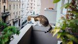 Im vergangenen Jahr wurde Klartext gesprochen: Haustiere dürfen nicht generell im Mietvertrag ausgeschlossen werden. Mit zwei dänischen Doggen in einer kleinen Einzimmerwohnung zu leben, haben die Richter sicherlich nicht gemeint.  Aber wie ist das mit dem Balkon? Darf sich die Katze dort aufhalten? Schon - aber es dürfen keine Tiere komplett auf dem Balkon gehalten werden. Grund dafür ist vor allem eine mögliche Geruchsbelästigung. Das gilt auch für Kleintiere im Käfig, wie Kaninchen oder Meerschweinchen. Und besonders laute Haustiere (Vögel) können auf dem Balkon zur Lärmbelästigung für Nachbarn werden.