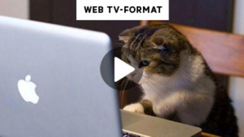 Eine Katze sitzt vor einem Laptop.