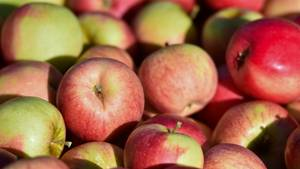 Boden und Wasser von Apfelplantagen in Europa pestizidbelastet