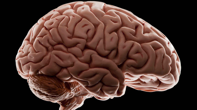 Aus Gehirnströmen lässt sich Sprache rekonstruieren
