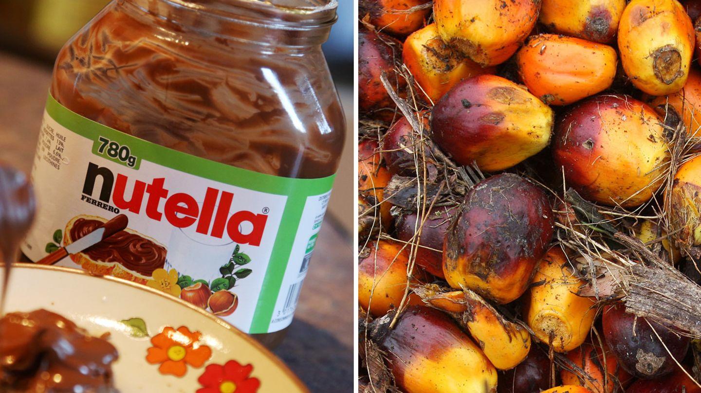 Palmöl-Früchte und Nutella - das umstrittene Pflanzenöl