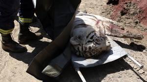 Weisser Tiger in Tiflis erschossen