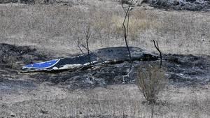 Absturzstelle in Kalifornien: James Horner ist mit seinem Privatflugzeug abgestürzt