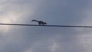 Eichhörnchen beim Baseball-Spiel
