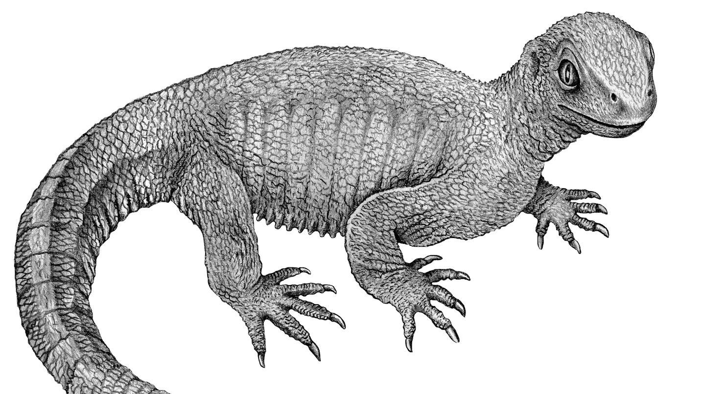 Die Ur-Schildkröte erhielt den Namen Pappochelys (Opaschildkröte). Statt einem Panzer hatte sie ungewöhnliche Rippen.