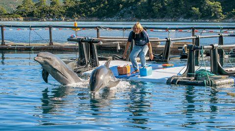 Zwei Dressur-Delfine werden in die Wildnis entlassen