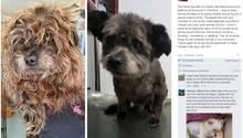 Auf diesem Bild ist der Tierheimhund Chester im vor seiner Adoption und danach zu sehen