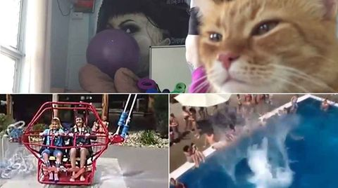 Webvideos der Woche: Wenn die Katze vorm PC das Sagen hat
