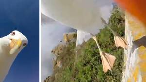 Möwe klaut Touristen GoPro und macht Rundflug