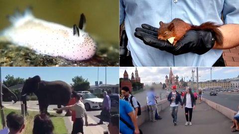 Webvideos der Woche: Von süßen Schnecken und Stalker-Eichhörnchen