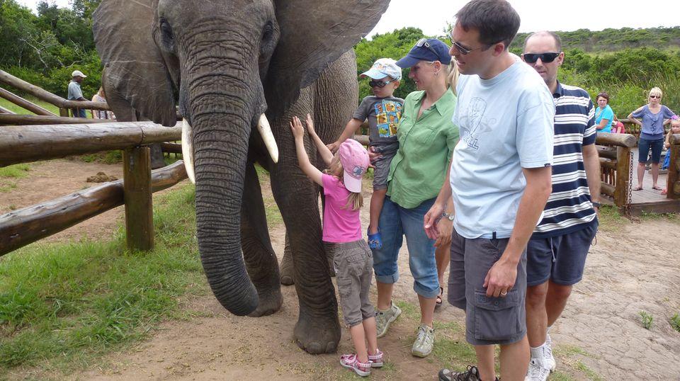 Familie Seidel trifft einen Elefanten