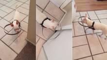 Hundesehhilfe