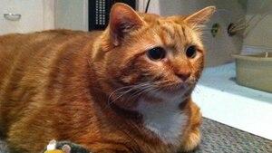 Der rotbraune Kater Skinny sitzt auf einem Polster neben seinem Spielzeug, einem kleinen Plüsch-Igel.