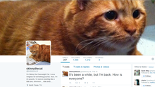 Ein Screenshot des Twitter-Accounts des Katers Skinny mit Posts und Fotos des rotbraunen Katers.
