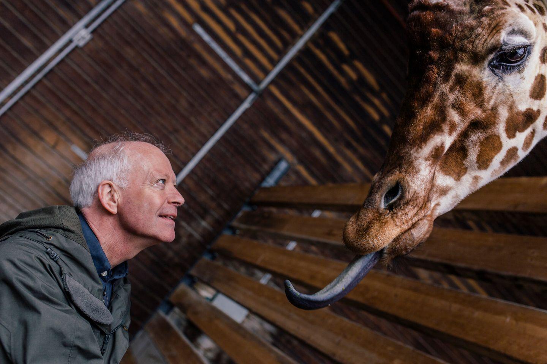 Der Zoodirektor des Kopenhagener Zoos Bengt Holst am 26.03.2015 mit Giraffen im Zoo.