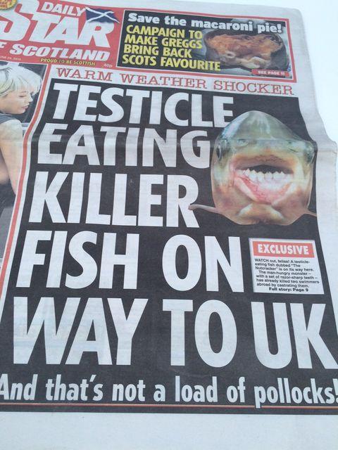 Last Call: Der Hoden-fressende Killerfisch und andere Gefahren