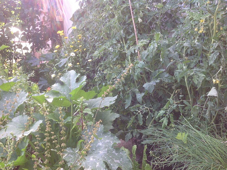 Gutes aus dem Küchengarten: Welches Gemüse soll ich anbauen?