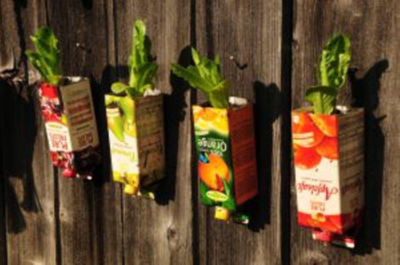 Gutes aus dem Küchengarten: Ab in die Höhe mit dem Gemüse