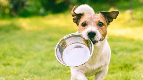Hundefutter bei Stiftung Warentest