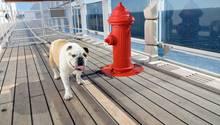 Hund an Bord der Queen Mary 2