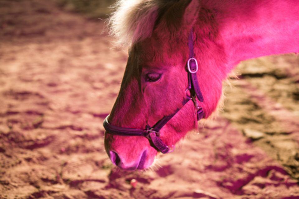Freizeit: Für Lina (Protokoll unten) sind ihre Eltern, der Geruch von Vanillepudding und ihr Pferd Heimat.
