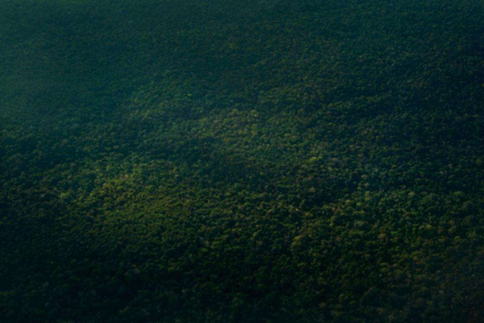 Zuhause: Alles dasselbe Ding: der Wald, aus dem Ayahuasca kommt, und der Frosch, mit dem man reden kann.