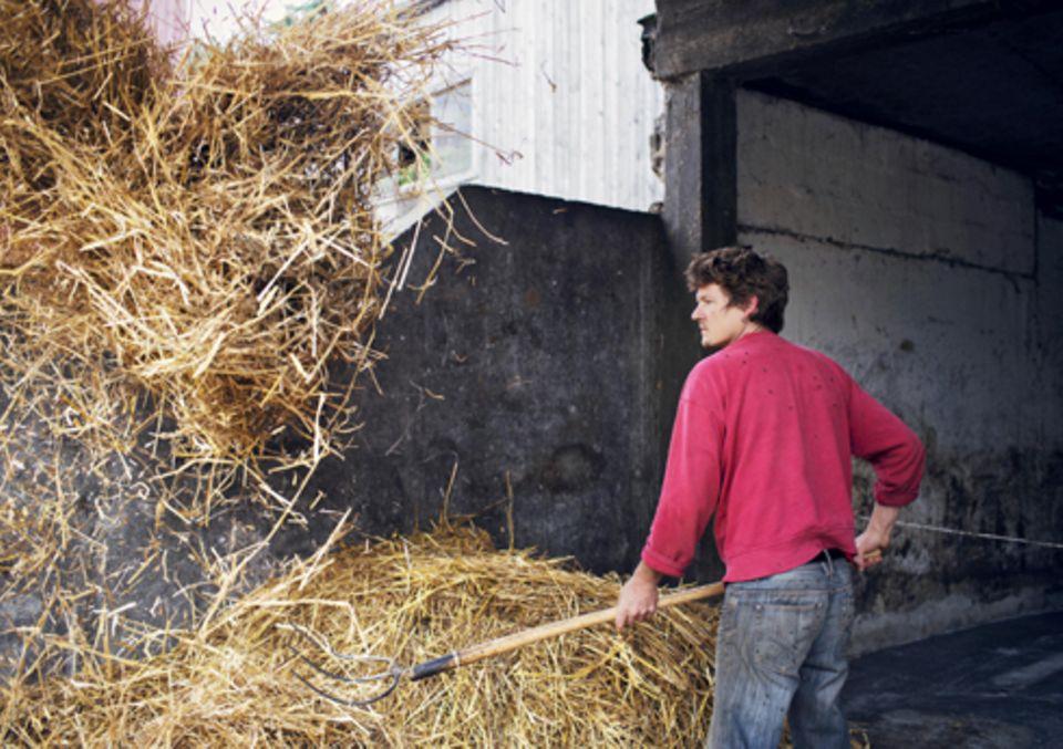 Politik: Bauernsohn Anselm verteilt Stroh im Kuhstall.