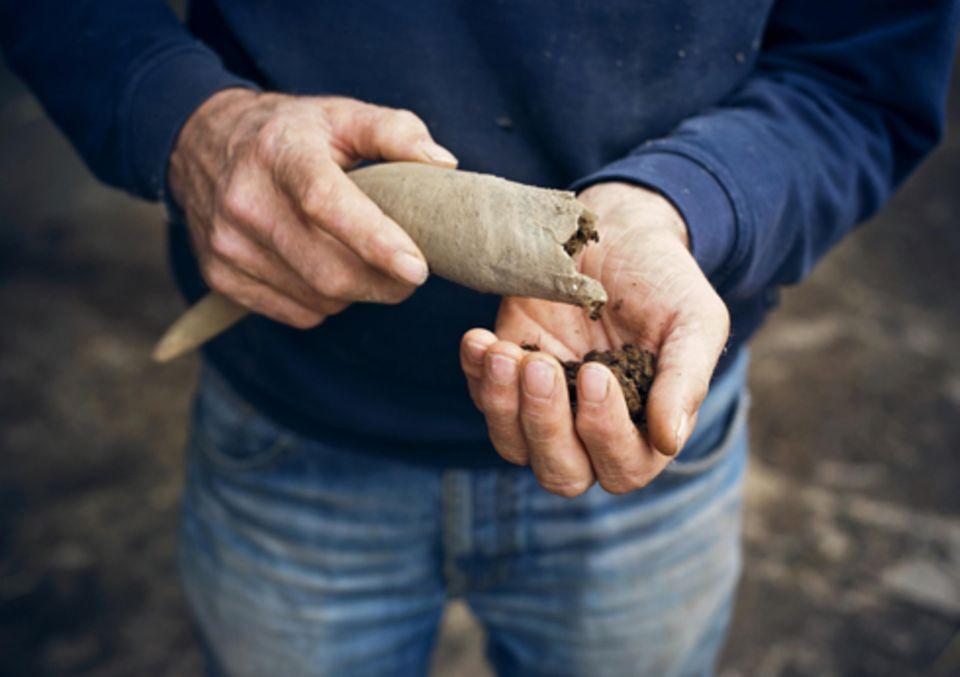 Politik: Das Kuhhorn-Mist-Präparat, mit dem Demeter-Bauern die Erde anregen wollen.
