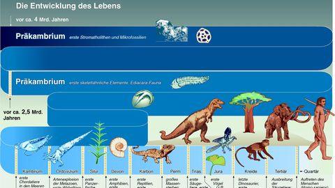 Die Entstehung des Lebens auf der Erde als Grafik