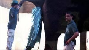 Ein Mensch im Müllsack verschwindet im Hintern eines Elefanten