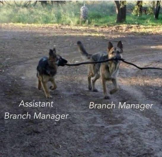 Abteilungsleiter