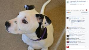 Der Hunde-Welpen Lucy hat ein besonderes Merkmal. Ihr linkes Ohr sieht wie Gesicht aus