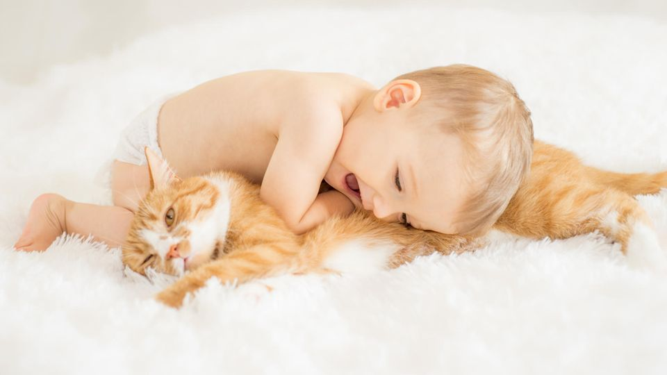 Ein Baby kuschelt mit einer Katze
