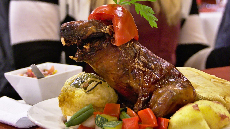 Meerschweinchen in Peru  Wir halten sie am liebsten als Haustiere, in Peru haben sie Meerschweinchen aber zum Fressen gern. Es steht meist auf der Speisekarte vieler traditionsreicher Restaurants, in Lima wird Meerschweinchen aber auch in der Spitzengastronomie serviert. Warum auch nicht? Wir essen schließlich auch Kaninchen.