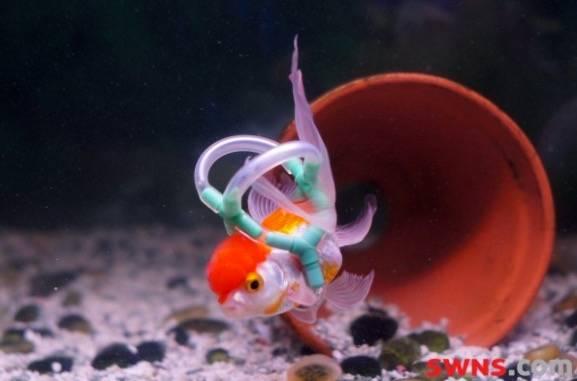Diesem kleinen Fisch wurde eine Unterwasser-Rettungsweste gebaut