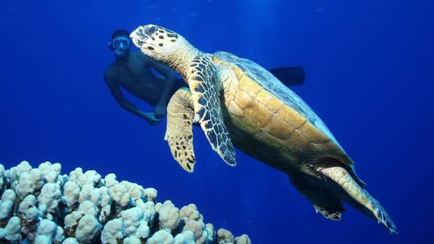 """""""Meine Spezialität sind Unterwasserfotografien. Als ich in Ägypten diese Karettschildkröte ablichtete, schwamm plötzlich einer unserer Bootsjungen ins Bild, um neben dem seltenen Tier her zu tauchen.""""      Mehr Fotos vonklicknikin derVIEW Fotocommunity      Aktionen und Informationen aus der VIEW Fotocommunity aufFacebookoderTwitter"""