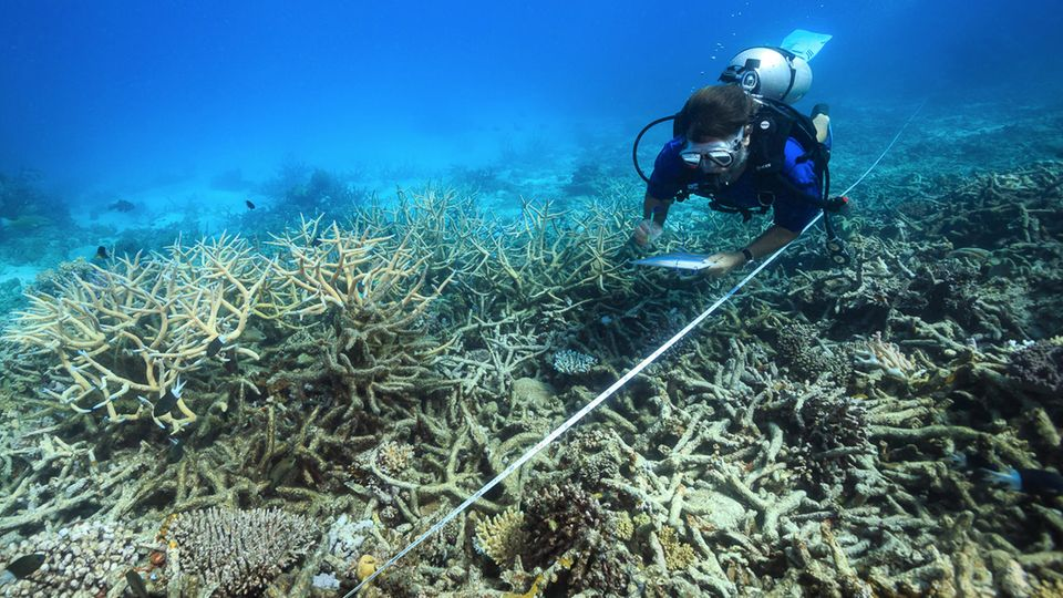 Ein Forscher dokumentiert die fortschreitende Korallenbleiche am Great Barrier Reef