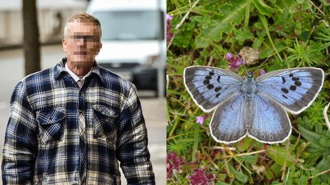 Der Schmetterlingssammler Phillip C. hat mindestens zwei Exemplare des Quendel-Ameisenbläulings getötet, so das Gericht.