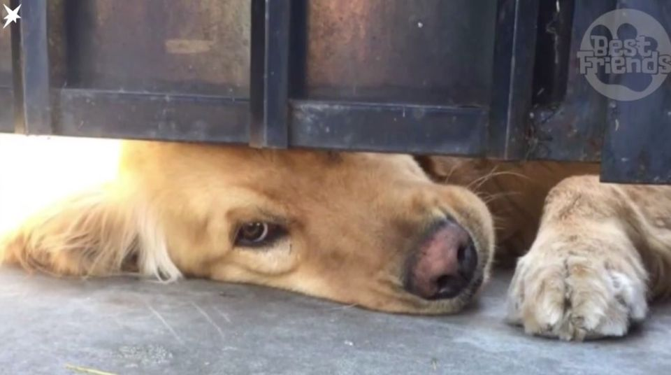 Welpentraining: Wie bekomme ich meinen Hund stubenrein?