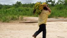 Bolivianische Ureinwohner des Tsimane-Stammes haben gesunde Herzen