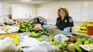 Unzählige Avocados, Mangos und andere Lebensmittel werden am JFK-Flughafen in New York konfisziert. Was passiert mit den Früchten danach?