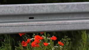 Zu sehen ist ein Symbolbild einer grauen Leitplanke mit einigen roten Blumen.