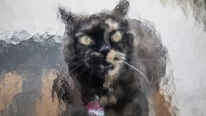 Eine schwarz-braun gescheckte Katze hinter einer Milchglasscheibe