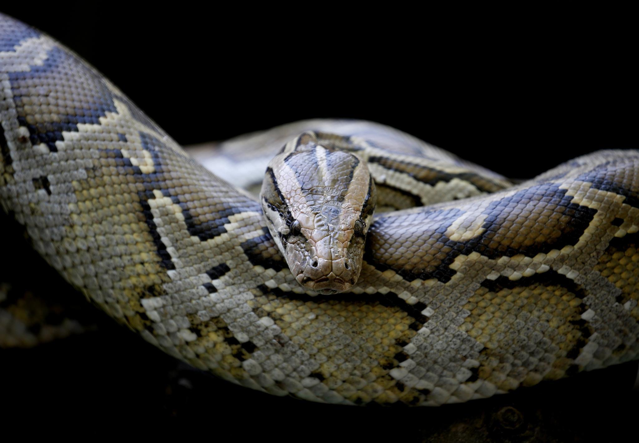 Python   STERN.de